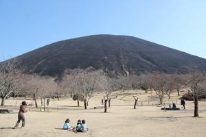 山焼き後のさくらの里から見た大室山。 全体が黒く焼けています